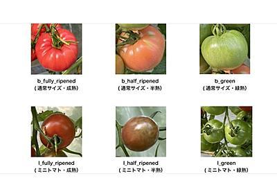 トマトの画像物体検出データセットが無料公開 農業でのAI活用に | Ledge.ai