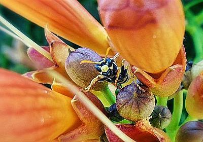 続報!蜂の巣の正体はアシナガバチ!駆除と放置どっちが正解? - ぐーたら主婦ブログをはじめる