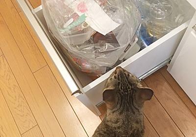ゴミ箱の中を見れば無駄使いが見えてくる。 -  新しいことを少しずつ。