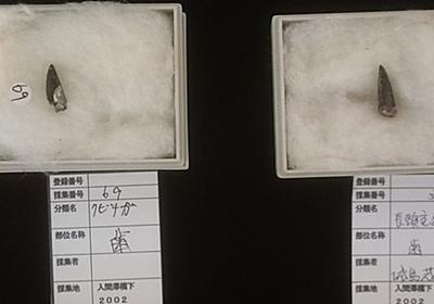 """福島で展示中のクビナガリュウの化石、なんと採集者が""""あのアイドル""""だった!「農業だけじゃなかったのか」 - Togetter"""