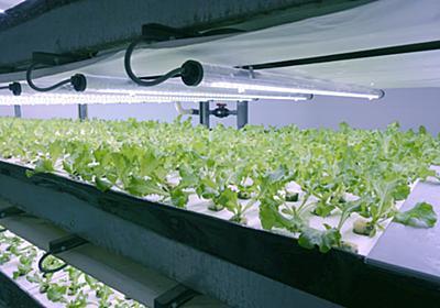 離島の生鮮品おまかせ 沖縄のIoT野菜工場  :日本経済新聞