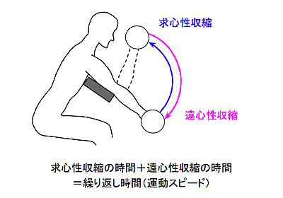 筋トレで筋肥大の効果を最大にする「運動のスピード」を知っておこう - リハビリmemo