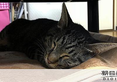 地震直後「猫がいない」ツイート多数 なぜ、どこへ?:朝日新聞デジタル