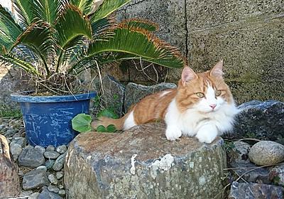 猫ちゃん主体で、いいんだよね、って思うと気が楽になった件 - ちょっと待て!同居介護と保護猫ちゃん