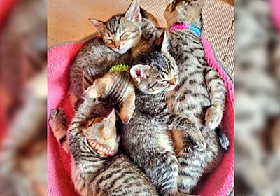 車庫で野良猫が赤ちゃんを産み、保護したが家で何をしてても30分置きに子猫ちゃんを吸いに行ってしまうツイ主さん - Togetter