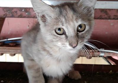 猫の話と病院の話【熟女の日常】 - 大人女子ヤギネの食レポブログ