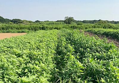 自然栽培農家が語る「理想」と「現実」【前編】  –  マイナビ農業