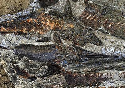 小惑星の地球衝突、化石に「記録」された発生直後の様子 写真7枚 国際ニュース:AFPBB News