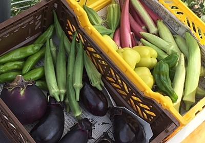 待ちに待ったオクラ ダビデの星収穫 - farm andante 美味しい野菜とふれあい菜園