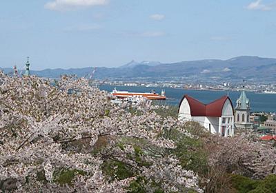 元町配水場から眺める桜あふれる街並み | 函館・青柳町暮らし