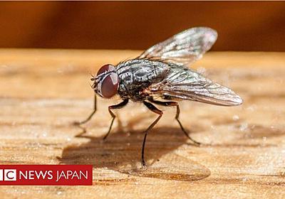 ハエを追い払おうと……自宅の一部吹き飛ばす フランス - BBCニュース
