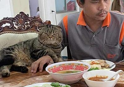 「猫に夫を奪われました」そう語る妻の嘆きを証拠写真と共にご覧ください : カラパイア