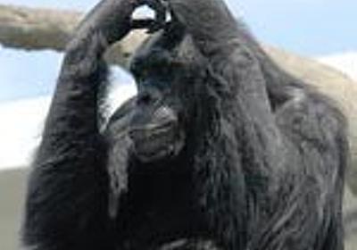 自分で勝手にハードルを上げて「こんなもん跳べるか!」と文句を言う人々 - Apes! Not Monkeys!  本館