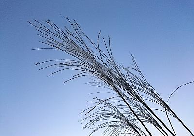 10月の草花と空 過去と未来 - ブーさんとキリンの生活