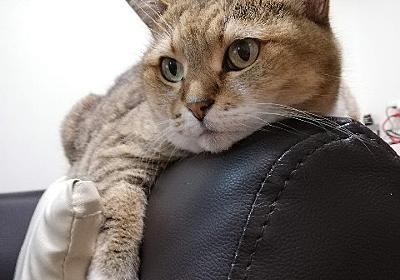 モノレールぷーちゃん特集。 - 続・猫とわたしの気まま日記。