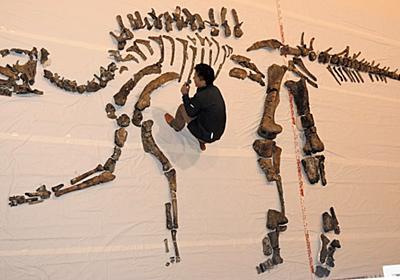 北海道:国内最大「むかわ竜」は新種か 化石取り出し完了 - 毎日新聞