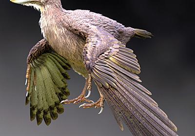福井で発見の鳥類化石は新種 始祖鳥に次ぐ原始的な鳥類:朝日新聞デジタル