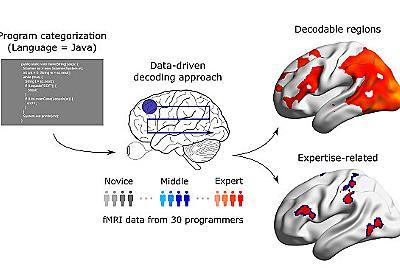 プログラミング上級者は脳活動が洗練されている——コード解析時の脳活動パターンが明らかに | fabcross