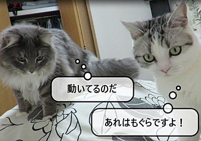 猫動画 ~「もぐらがいますよ!」~ - 猫と雀と熱帯魚