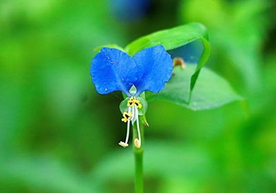 季節の花(令和三年六月3 ) - 風のかたみの日記