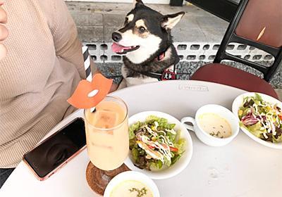 【京橋】TERRE-á-S(テラス)さんでランチタイム【犬 同伴OK】 - 黒柴・大和の外面重視な生活