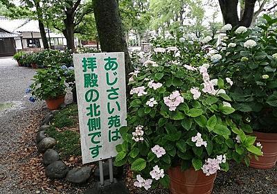 愛知県一宮市の御裳〔みも〕神社へアジサイを見に行った。ただし同社を会場とした「尾西あじさいまつり」今年は中止とのこと - しいたげられたしいたけ