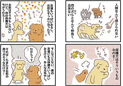 【犬マンガ】「保護犬」と聞いてどんなイメージが浮かびますか? - こぐま犬と散歩〜元保護犬の漫画日記〜