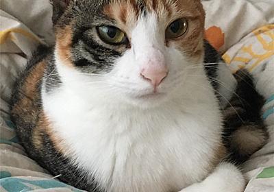 初デートでサイゼリアはアリかナシかについて私が個人的に思うこと。(脱線記事) - 猫にそんなこと聞かないで。
