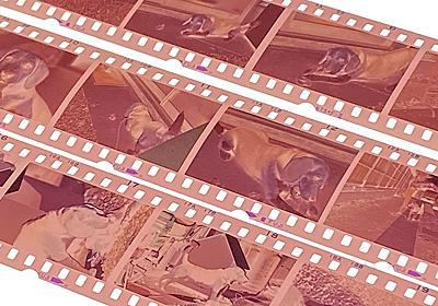 [スタパ齋藤の「スタパトロニクスMobile」] 写真フィルム×約170本をデジタル化した話