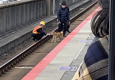 「これは無罪」「許した」 JR西日本でワンちゃんが線路に進入、遅延が発生するもほのぼの珍事に癒やされる人が続出 - ねとらぼ