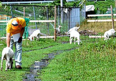 ベトナム人被告はなぜヤギを食べた 「過酷な生活」証言:朝日新聞デジタル