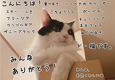 知覚過敏症の近況 - 福ふく堂 -猫のおもちゃ箱-