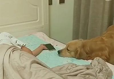 飼い主が眠りに落ちるとスマホを片付け毛布をかけ電気を消してくれる犬 : カラパイア