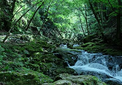 自然に囲まれた深山幽谷を歩く。三重の山間部を流れる「赤目四十八滝」とは | RETRIP[リトリップ]