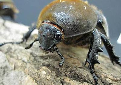 クワガタムシは不良、スズメバチは殺戮兵器 - 虫