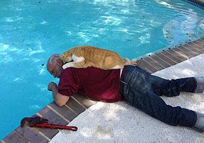 猫を愛し、猫に愛された男たち。磁石のようにくっついてる猫とメンズの写真館 : カラパイア