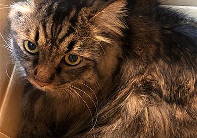 だって、猫だもの。 - えと的日常〜猫がブログ始めました〜
