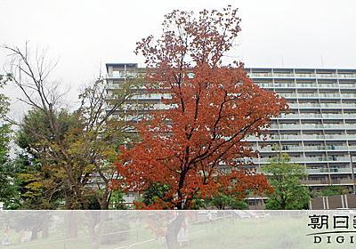 東京の公園で木の伝染病が急拡大 500本枯れ、伐採:朝日新聞デジタル