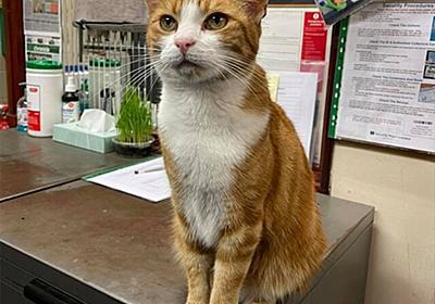 海外へ引っ越しする飼い主から猫を引き取った駅員。職場を共にし猫職員に昇格 : カラパイア