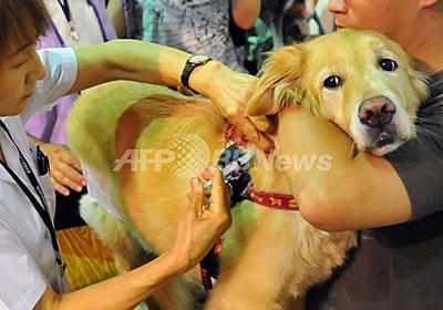 台湾で狂犬病の感染拡大、予防接種に行列 写真9枚 国際ニュース:AFPBB News