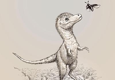 孵化前のティラノサウルス類の化石を発見、初 | ナショナルジオグラフィック日本版サイト