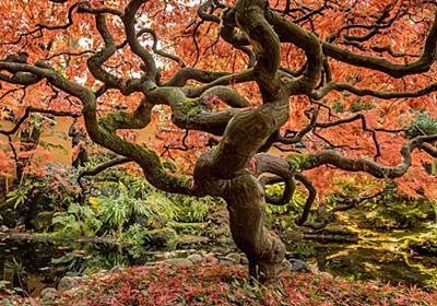 Best Places for Autumn Colors Viewing