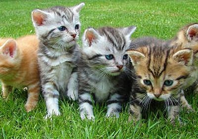 「猫の楽園」を科学の発展のために作ってしまった大学 - GIGAZINE