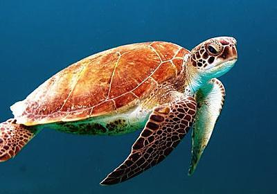 1万歳超えや驚異の不老不死までいる「長寿な動物」トップ10 - GIGAZINE