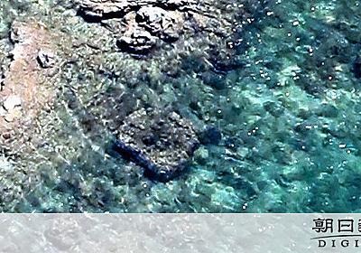 埋め立て予定海域に大型サンゴ2群体 辺野古上空で確認 - 沖縄:朝日新聞デジタル