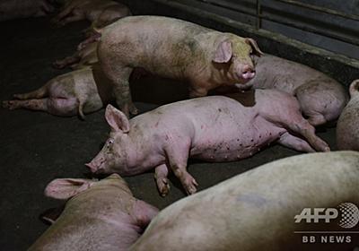 新型豚インフルの流行懸念、中国は重大視しない姿勢 写真5枚 国際ニュース:AFPBB News