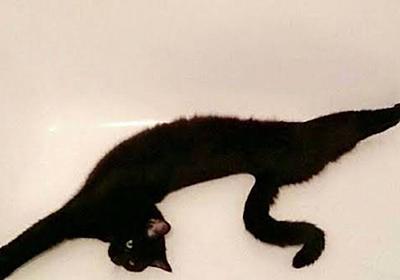 #猫伸ばしチャレンジ 猫って何でこんなに伸びるの?「何かのロゴみたい」「夏はよく伸びる」野生を忘れて伸びまくるネコチャンたち - Togetter