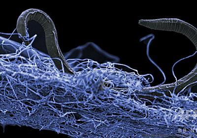 地下深部に広大な「生命体の森」 国際研究で発見 写真1枚 国際ニュース:AFPBB News