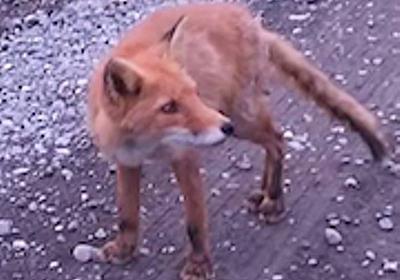 Red Fox 「善光寺が発した静かな怒り?」2ちゃん発の怪文書