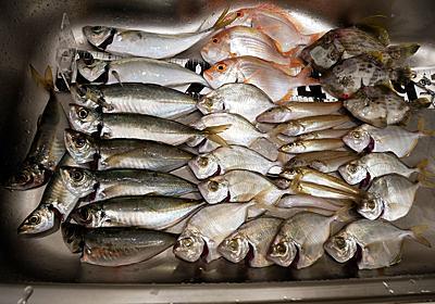 【音海ウミック】五目釣り!夏と言えばアジ・キス、そして・・。 - Re:フルスロットルは年に10回!!!木曽川でハゼ テナガエビ釣り。